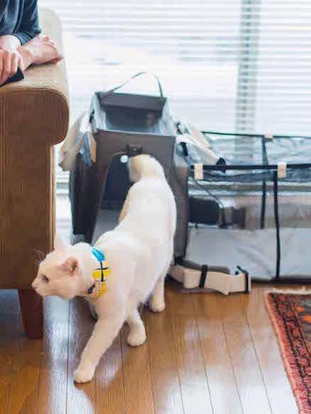 写真:LEONIMAL リュック型ペットキャリー GRAMP